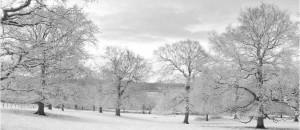 Winter Wonderland Black & White